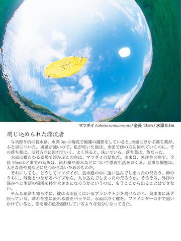 桜島の海へ 錦江湾生き物万華鏡