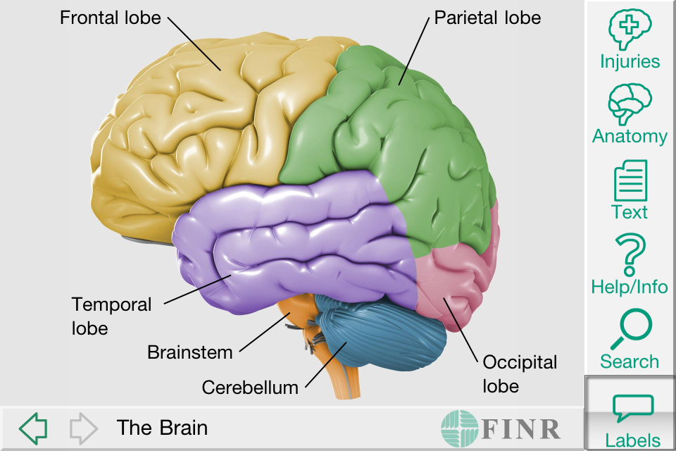 App Shopper: FINR Brain Atlas (Medical)