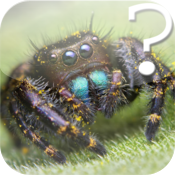Spider Quiz for iPad icon