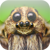 Bugs! - Incredible Macro Photography by Thomas Shahan icon