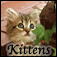 Cutest Cats & Kittens