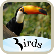 Birds Dictionary icon