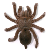 Real Creepy Crawlies icon