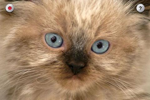 Gatito que habla