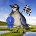 Bird Race - The remake!