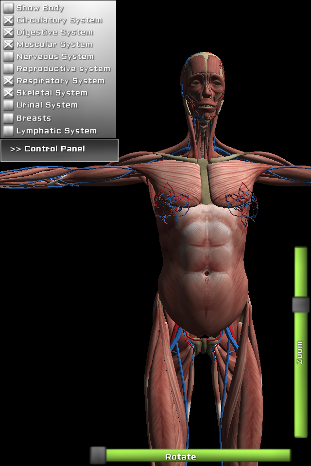 Free 3d anatomy