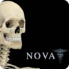 Skeletal System Pro II