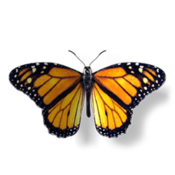 Monarch: The Butterfly King icon