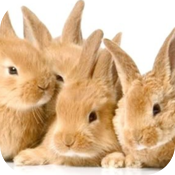 Fluffy Bunnies Jigsaw Puzzle HD icon