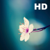 Flower Collection HD