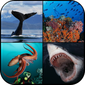 Ocean Encounters:  A Photographic Exploration of Marine Wildlife by Brandon Cole icon