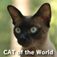 CAT of the World