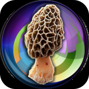 My Mushroom Log icon