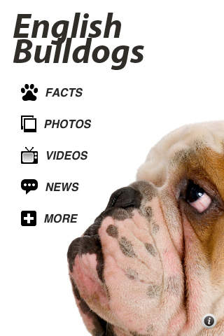 Bullies - English Bulldog Fun iPhone Screenshot 5