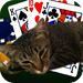Poker With My Cat