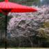 和の壁紙 for iPad「京都」