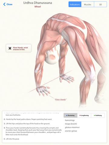 Yoga Anatomy Pro - Learn the anatomy behind the Asanas of Hatha Yoga ...