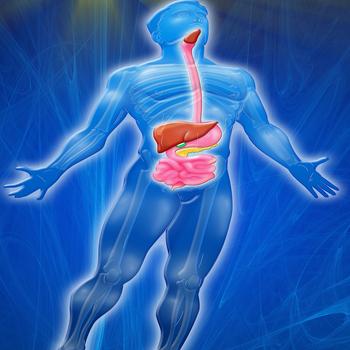 Human Body : Digestive System Trivia LOGO-APP點子