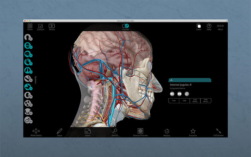 人体解剖学图谱 Human Anatomy Atlas for Mac