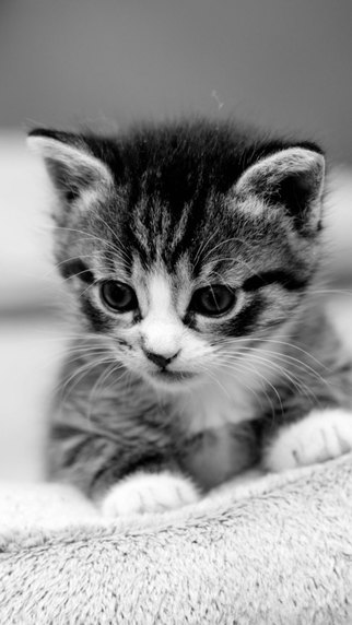 Cat Wallpapers: Retina Display HD Backgrounds