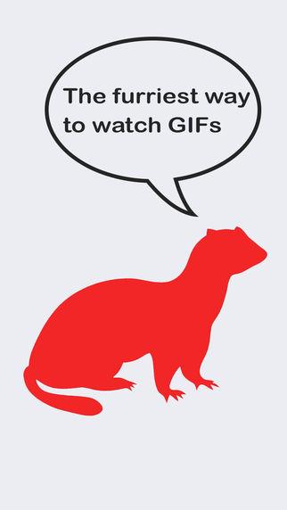 Furry Ferret - GIFs GIFs and GIFs