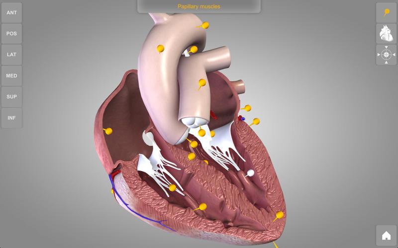 Heart 3D Atlas of Anatomy Lite Screenshot - 3