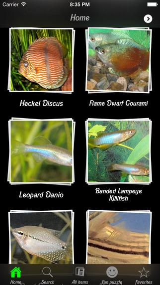 Fish - Aquarium