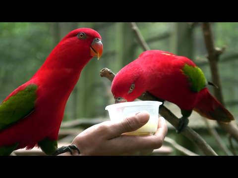 Birds Video Touch