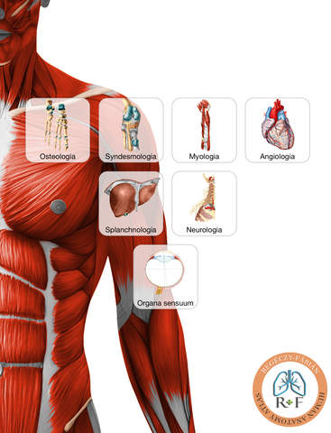 Regéczy-Fábián Human Anatomy Atlas