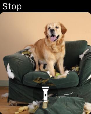 Screenshot #14 for Dog Monitor