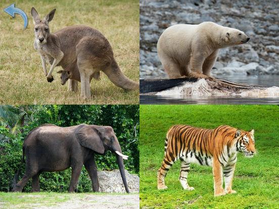 Животные для Малышей, Звуки, Фото Животных, Зверей