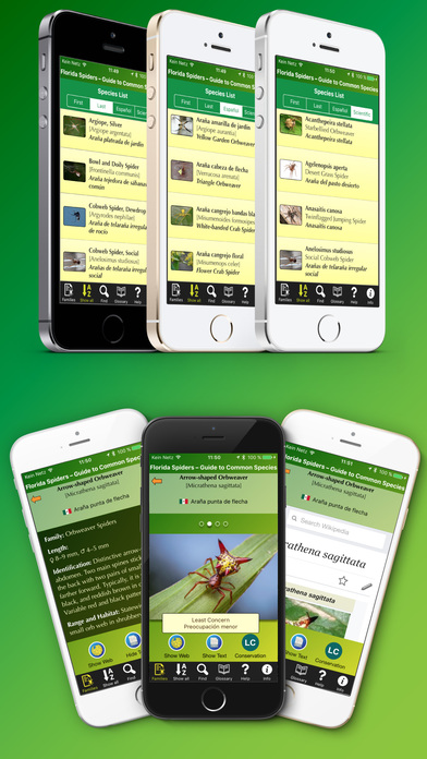 download Florida Spiders - Guide to Common Species apps 2