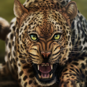 Life Of Leopard