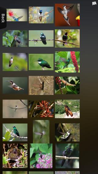 Hummingbirds Info