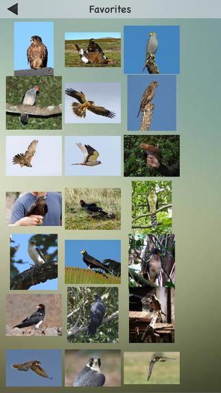 Falcons and Caracaras Guru