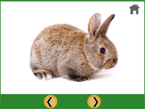 Rabbits and darts for children iPad Screenshot 3