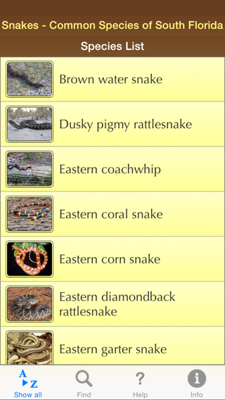 Snakes – Common Species of South Florida