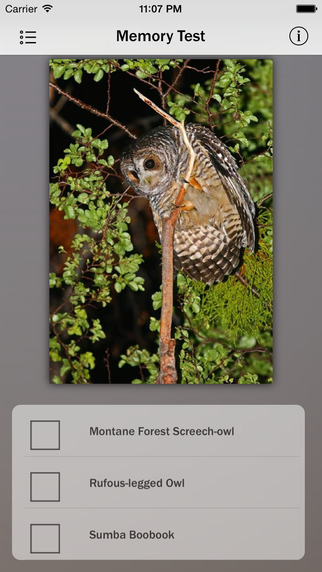 Owls Guru