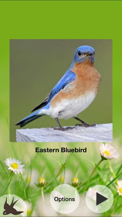 Chirp! Bird Songs USA + iPhone Screenshot 4