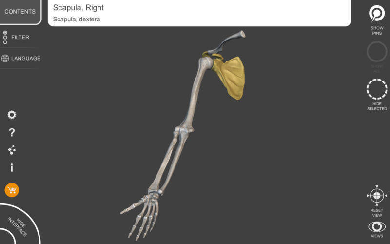 Skeletal System Lite Screenshot - 4