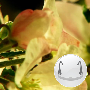 Nature 3 (Breathing Apps) LOGO-APP點子