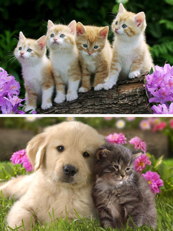 cats amp dogs wallpapers hd cute puppies amp kittens on the