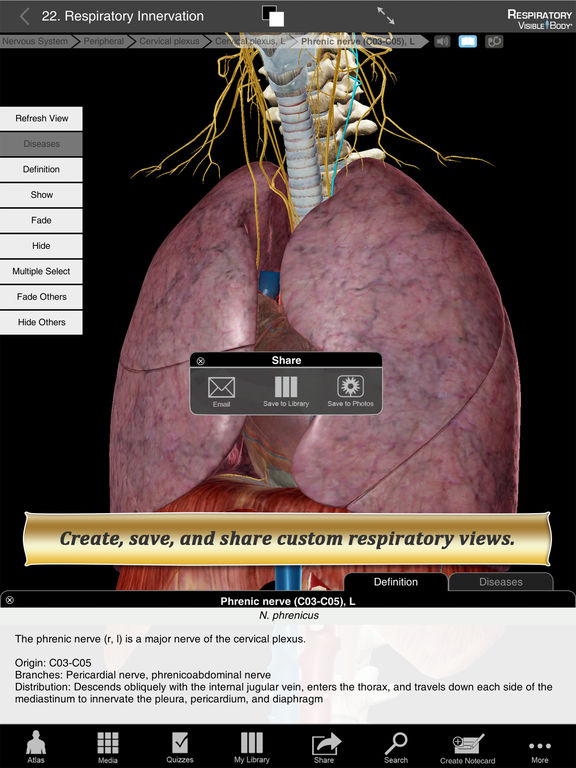 Respiratory Anatomy Atlas: Essential Reference for Students and Healthcare Professionals Screenshots
