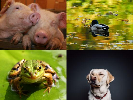 Learn and Go Animals iPad Screenshot 3