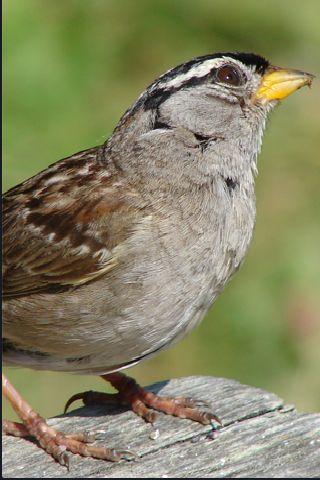 SlidePuzzle - Sparrow screenshot #3