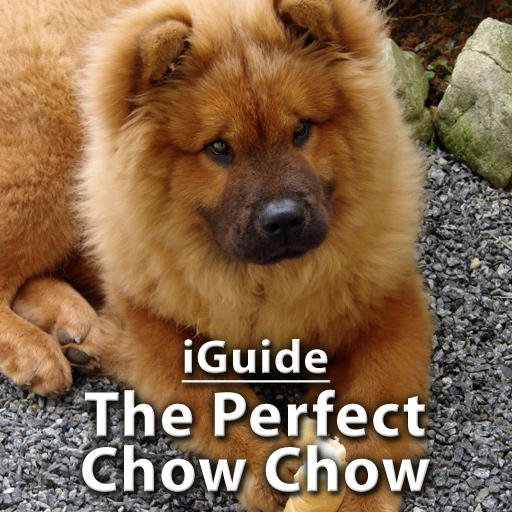 iGuides - The Perfect Chow Chow