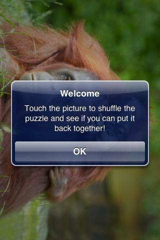 Orangutan Family Slide Puzzle screenshot #3