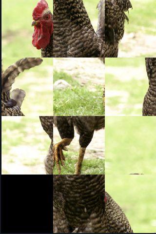 SlidePuzzle - Chicken screenshot #1