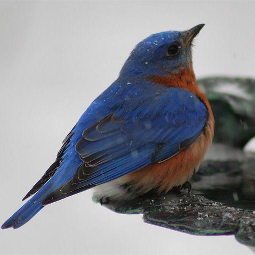 SlidePuzzle - Bluebird