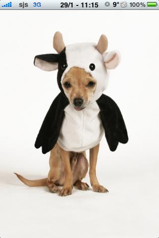 Super Crazy Cow Dog Slide Puzzle screenshot #1